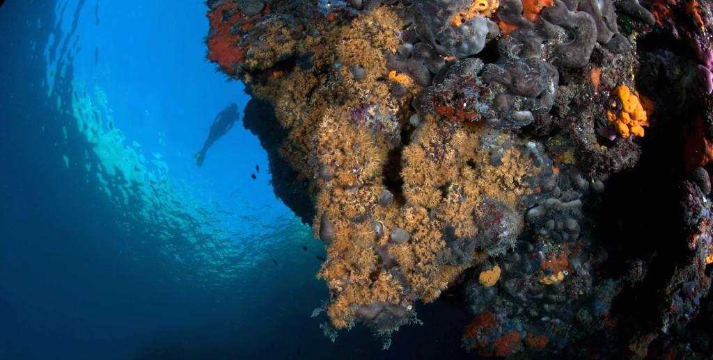 isole tremiti 2014